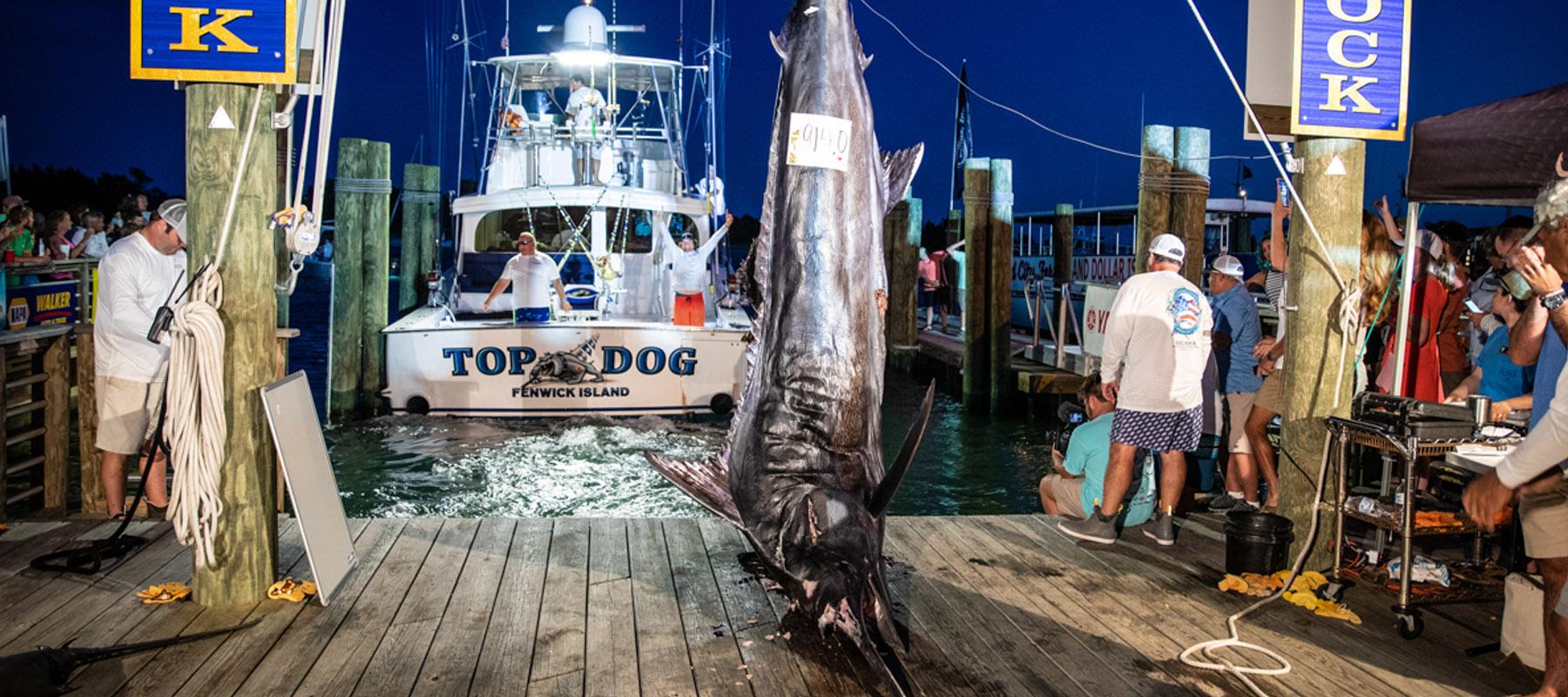Big Rock | Blue Marlin Tournament